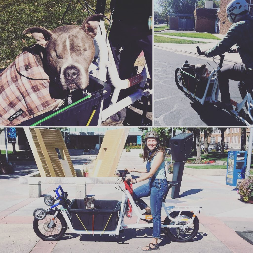 Carry dogs by cargo bike